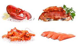 Set of sea food. On a white background. Crab, shrimps, lobster, salmon Royalty Free Stock Photography