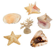 Set of sea invertebrates Stock Photos
