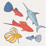 Set of sea and ocean fish. Tropical decorative fish. Royalty Free Stock Photography