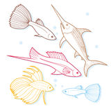 Set of sea and ocean fish. Tropical decorative fish. Stock Photo