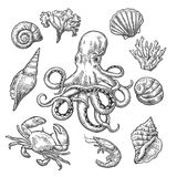 Set sea shell, coral, crab, shrimp and octopus. Vector black engraving vintage illustrations. Isolated on white background royalty free illustration
