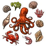 Set sea shell, coral, crab, shrimp and octopus. Royalty Free Stock Photo
