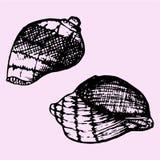 Set of sea shell Royalty Free Stock Photo