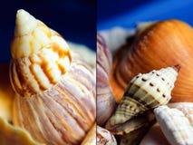 Set of sea shells. Set of close up photographs of sea shells Stock Photo