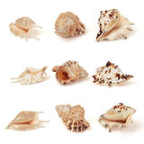 Set of sea shells. Stock Photo