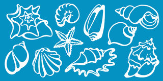 Set of sea shells on a blue background. Undersea world. Vector line Stock Photos