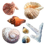 Set of Sea Shells And Coral. Stock Images