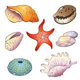 Set of  sea shells Royalty Free Stock Image