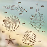 Set of sea shells on the sea background  illustration Royalty Free Stock Photography