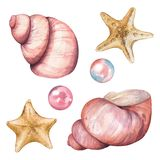 Set of sea shells. royalty free stock photography