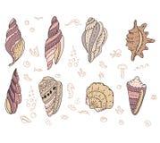 Set with sea shells Stock Photo
