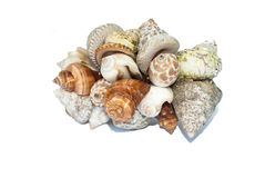 Set of sea shells. Royalty Free Stock Photo