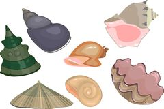 Set of sea shells Stock Image