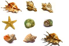 Set of sea souvenirs. The set of sea souvenirs on a white background is isolated Stock Images
