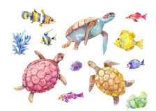 Set of sea turtles, marine fish and algae watercolor. Set of sea turtles, marine fish and algae painted in watercolor, isolated on white background. Hand-drawn Stock Photo