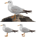Set of seagulls  on white Royalty Free Stock Photography
