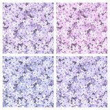 Set of seamless backgrounds with lilac flowers. Vector illustration. Stock Photography