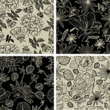 Set of seamless floral patterns. Vector set of seamless floral patterns with spring flowers Royalty Free Stock Photos