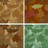 Set of seamless leaves backgrounds Royalty Free Stock Photography
