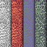 Set of seamless leopard patterns. Seamless animal pattern skin fur vector pack. set of seamless leopard patterns Stock Image