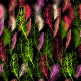 Set of seamless pattern vector feathers. EPS Stock Photo