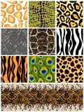 Set seamless patterns animals. Vector. Set seamless the patterns animals. Vector illustration Stock Photography