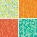 Set of seamless patterns with camomile. For your design. Vector background Royalty Free Stock Image