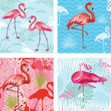 Set of Seamless patterns with flamingoes Stock Image