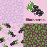 Set seamless texture with blackcurrant. Set of seamless vector patterns of black currant, suitable for backgrounds, gift cards, wallpapers Royalty Free Stock Image