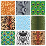 Set of seamless textures of animal skins, Royalty Free Stock Photos