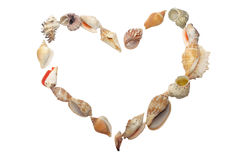 Set of seashell  in the form of heart Stock Photography