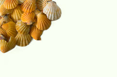 Set of seashell isolated on white background Stock Photography