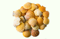 Set of seashell isolated on white background Stock Photo