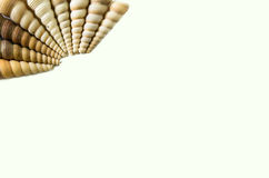 Set of seashell isolated on white background Stock Image