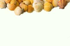 Set of seashell isolated on white background Stock Photography