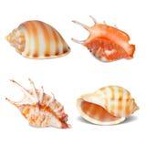 Set of Seashell Stock Photos
