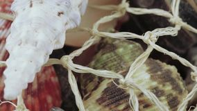 Set of seashells bulk. A pile of sea shells in bulk in a grid stock video