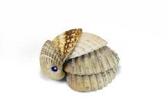 A set of seashells isolated on white Stock Image