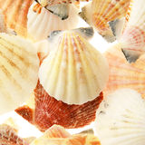 Set of seashells. Isolated Stock Images