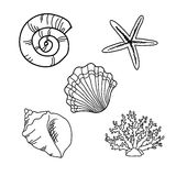 Set of seashells Stock Image
