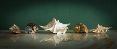 Set of seashells on a marble Stock Images