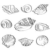 Set seashells, outline Stock Photos