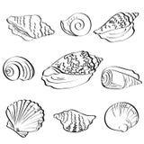 Set seashells, outline Stock Photos