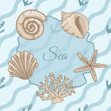 Set of seashells with seamless patterns of waves Royalty Free Stock Photo