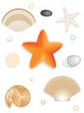 Set of seashells, seastar, stones. Isolated on white background Royalty Free Stock Photo