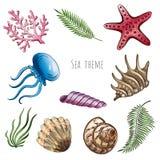 Set of seashells, starfish and jellyfish on white background for design. Set of seashells, starfish and jellyfish on white background for design Stock Images