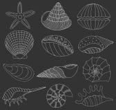 Set of seashells and starfish Stock Image