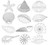Set of seashells and starfish Royalty Free Stock Photography