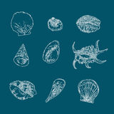 Set of seashells vector on blue background. Hand drawn sketch. Royalty Free Stock Photos