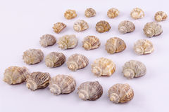 Set of seashells Royalty Free Stock Images